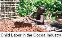 Cocoa child labor